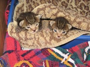 Early Release Kittens